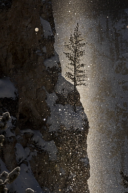 Sun beam at sun rise over the Grand Canyon of the Yellowstone, Yelllowstone National Park, Wyoming, USA. January 2016