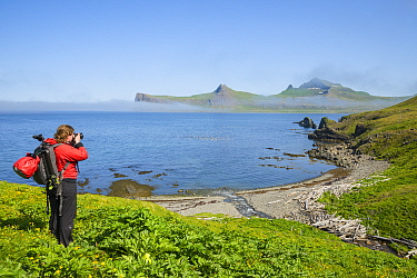 Photographer Megan Whittaker overlooking small bay and Kittiwakes (Rissa tridactyla), Hornvik, Hornstrandir, Iceland. July