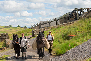 Two lead miners leading two Dales ponies, in front of the waterwheel, at Killhope Museum, near Cowshill, Upper Weardale, County Durham, North Pennines, England, UK, August 2016.  Critically Endangered...