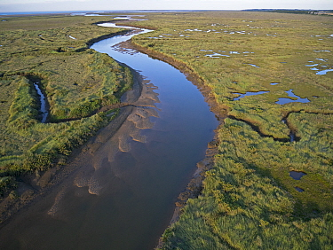 Aerial view of saltmarsh between Wells and Stiffkey on Holkham National Nature Reserve, North Norfolk, UK August