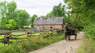 Canadian Horse gelding pulls a trailer, at Upper Canada Village Museum, Morrisburg, Ontario, Canada. Critically Endangered horse breed.