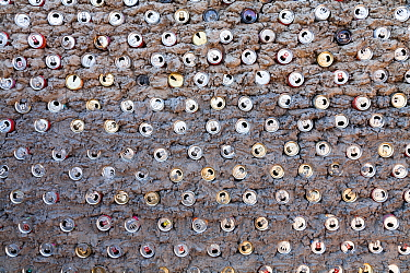 Hut wall built  with recycled  aluminium cans mixed with clay, making the walls very strong, Mababe village, Botswana