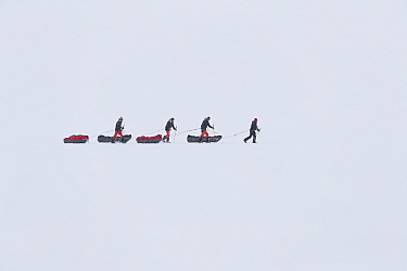 Four people skiing across snow pulling sledges, winter, Spitsbergen, Svalbard, Norway, April. 2016.