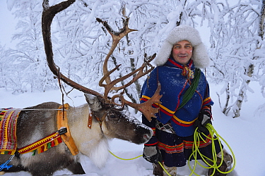 Reindeer sledding in - 25 C, with Nils-Torbjorn Nutti, owner and operator of Nutti Sami Siida, Jukkasjarvi, Lapland, Laponia, Norrbotten county, Sweden Model released.