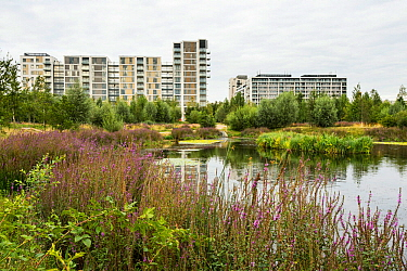 Environmental enrichment designed into housing estate, with wildlife pond and green space, East Village housing at site of Olympic Village, Stratford, London, UK 2014