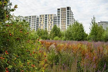 Environmental enrichment designed into housing estate, East Village housing at sit of Olympic Village, Stratford, London, UK 2014