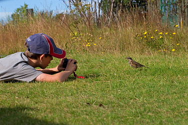 Boy photographing an Icelandic Redwing (Turdus iliacus coburni), Iceland, August. Model released