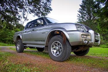Pine marten (Martes martes) perching on tyre of vehicle, Ardnamurchan, Lochaber, Highland, Scotland, UK, June.