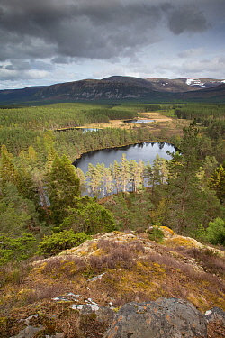 Uath Lochans surrounded by Scots pine (Pinus sylvestris) woodland, Glenfeshie, Cairngorms National Park, Scotland, UK, May 2014.