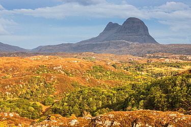 Hills of regenerating woodland across Assynt with Suilven in distance, Lochinver, Sutherland, Scotland, UK, May 2016.