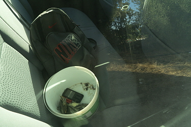 Blackcaps (Sylvia atricapilla) dead in bucket, in a police car. Cyprus October.