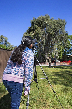 Student from Abraham Lincoln Elementary School watching Ninth Street Rookery through a telescope, Sonoma County, California, USA.