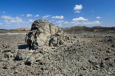 Stony desert, Masirah Island, Sultanate of Oman, February.