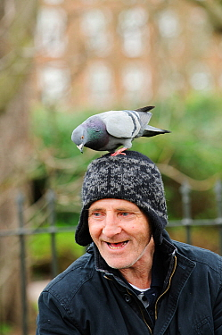 Man with Feral pigeon (Columba livia) perched on his head, Regents Park, London, England, UK, February