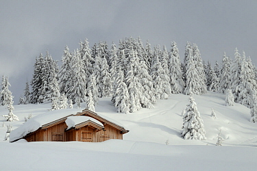 Alpine chalet and landscape after fresh snow, Les Houches, Haute-Savoie, France, February 2013.