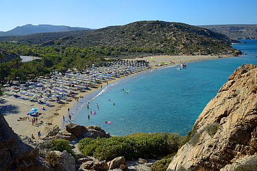 Overview of Vai beach and its Cretan Date Palm (Phoenix theophrasti) forest in peak tourism season, Lasithi, eastern Crete, Greece, July.