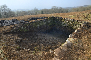 Derelict dewpond cleared of weeds, mud and rocks by volunteers from the Reptile and Amphibian Group for Somerset and Somerset Wildlife Trust during renovation work to encourage use by Great crested ne...