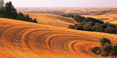 Stubble fields after the wheat harvest, Palouse, Steptoe Butt State Park, Washington, USA