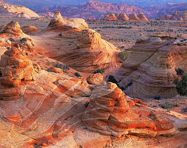 Petrified sand dunes with eroded sandstone at sunset, Paria Canyon-Vermilion Cliffs Wilderness, Arizona, USA
