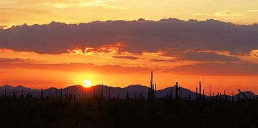 Sunset at Javalina Mountain and the Sand Tank Mountains, Sonoran Desert National Monument, Arizona, USA