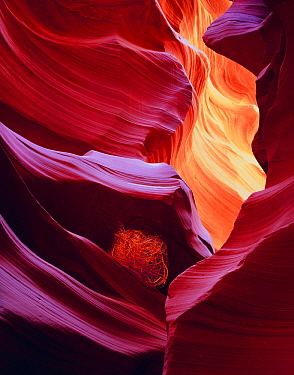 """Patterns on canyon walls with """"tumbleweed"""" wedged between strata of a slot canyon on the Navajo Indian Reservation, Antelope Canyon, Arizona, USA"""