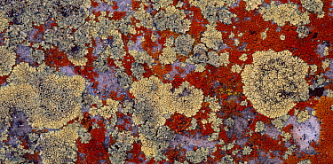Lichen covered rocks at Marble Viewpoint, Kaibab National Forest, Grand Canyon National Park, Arizona, USA