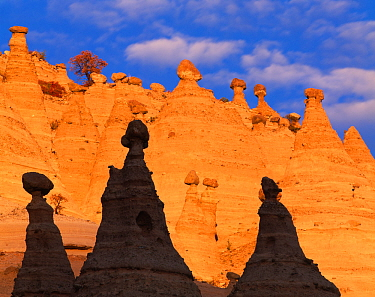 Tent rocks in the Peralta Canyon, New Mexico, USA. Rocks are conical formations of eroded volcanic tuff and pumice supporting 'cap rocks'.
