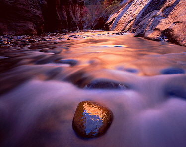 Virgin river flowing through Zion Canyon Narrows, with reflections of afternoon sun, Zion National Park, Utah, USA