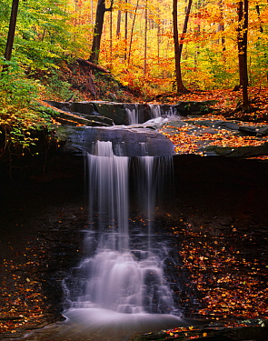 Autumnal landscape with Sugar maple (Acer saccharum) and American beech (Fagus grandifolia) forest, and Blue Hen Falls, Cuyahoga Valley National Park, Ohio, USA, October 2006.