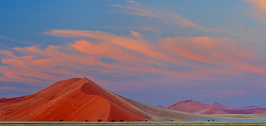 Sossusvlei World Heritage Site, with curving red sand dunes and Acacia trees.  Namib-Naukluft National Park, Namibia. June 2013.