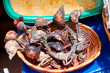 "Llama foetuses for sale in a La Paz market, Bolivia. December 2016. The ""Witches' Market"" stalls of La Paz are run by local witch doctors. Llama foetuses are believed to be good luck and are sometimes..."