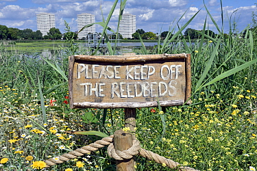 Wild flowers and reedbeds surround a sign at Woodberry Wetlands with thetower blocks of the Woodberry Down Estatein the distance. The former Stoke Newington East Reservoirin Hackneyis owned by Thames...