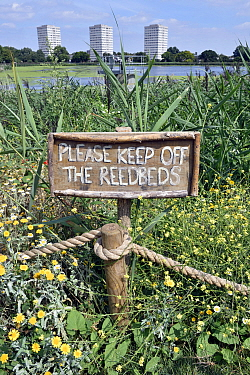 Wild flowers and reedbeds surround a sign at Woodberry Wetlands with the tower blocks of the Woodberry Down Estate in the distance. The former Stoke Newington East Reservoir in Hackney is owned by Tha...