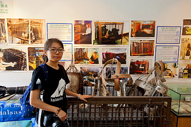 Animals Asia volunteer standing in front of a display about bear bile farming and a disused, rusty cage full of illegal metal jackets used to hold a catheter in place so that bile can constantly leak...