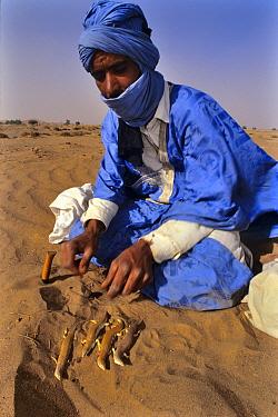 Bedouin preparing sandfish (Scincus albifasciatus) to eat, Erg Chigaga, Morocco
