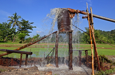Drainage system for gemstone mine shafts under paddy fields, Ratnapura, Sri Lanka, December 2012.