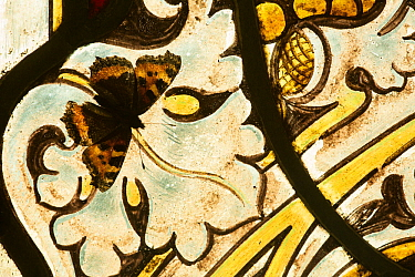 Small tortoishell butterfly (Aglais urticae) on a stained glass window  of church on a sunny day Sheffield, England, UK, January.