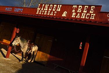 Saddled horse tied up outside Linden Tree Retreat & Ranch, Velika Plana, Velebit Mountains Nature Park, Croatia, April 2014.