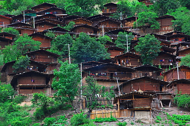 Houses of the Lisu people tightly packed together on slope, Weixi county, Yunnan Province, China. July 2009