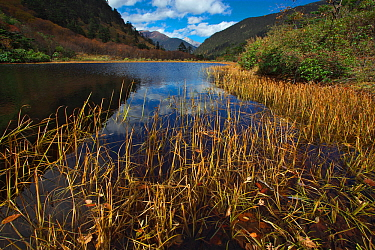 Reeds on shore of river, Mount Kawakarpo, Meili Snow Mountain National Park, Yunnan Province, China. October 2009