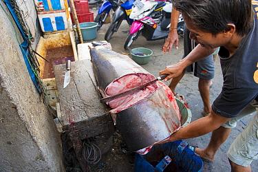 Man cutting up Mako shark (Isurus oxyrinchus) in fish market, Bali, Indonesia, August 2014. Vulnerable species.