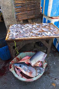 Shark fins (Squalus sp) for sale in fish market, Mako shark (Isurus oxyrinchus) head in bucket below. Bali, Indonesia, August 2014.