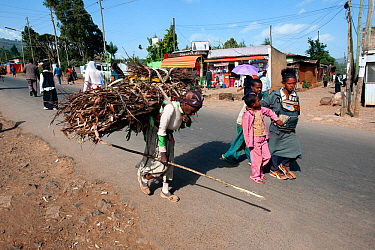 Woman transporting firewood on her back to be used for cooking. Addis Ababa, Ethiopia. February 2009