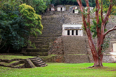 Bonampak Mayan ruins,  Montes Azules Biosphere Reserve, Chiapas. Mexico.