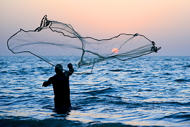 Fisherman throwing net into the sea in traditional way at sunset, Orango Island, Bijagos UNESCO Biosphere Reserve, Guinea Bissau, February 2015.