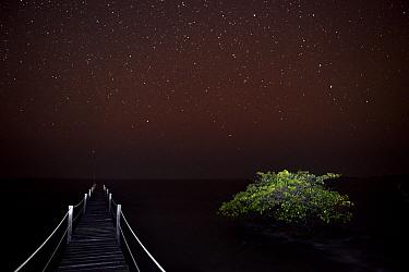 Starry night over Atlantic Ocean, from a wooden pier with Mangrove tree beside it, Orango Island, Bijagos UNESCO Biosphere Reserve, Guinea Bissau, February 2015.