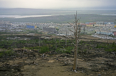 Polluted land with dead trees near Norilsk, a large industrial town above the Arctic Circle which produces Nickle, Palladium, Copper, Cobalt etc. and is the largest stationary source of air pollution...