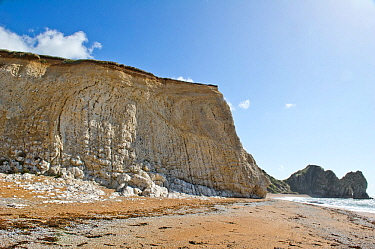 Vertical beds of Cretaceous chalk, with layers of flint and rotated normal faults, Jurrasic Coast, near Durdle Door, Dorset, England, UK.