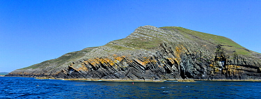 Sea cliffs, geological section through Cambrian and Ordovician sedimentary rocks with faulted monocline fold structure. Rocks include Nant-pig Musdstones, Abersoch, Gwynedd,  Wales, UK
