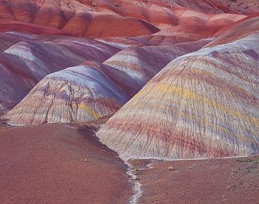 Eroded Chinle shale mounds with colour bands, beneath the Paria Plateau, Vermilion Cliffs National Monument, Paria Canyon Vermilion, Arizona, USA.